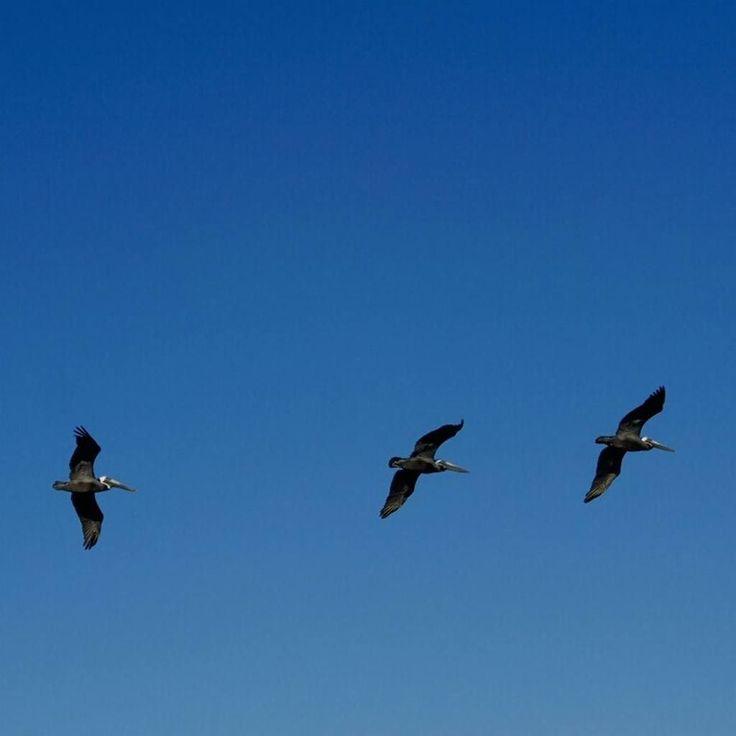 Y las palabras más simples las cotidianas Logran alzar su vuelo desde mi casa Para ser emisarias en el cielo De toda la pureza de mi alma #poema #poem #DiaMundialDeLaPoesia #WorldPoetryDay #instapoem #instahub #instamood #instame #instadaily #instalike #instapic #yo #me #instagood #instacool #Venezuela #instave #instalove #aves #vuelo #cielo #birds #flight #sky #azul #blue #AF