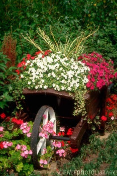 Shabby chic wheelbarrow for garden decor, one pinner suggests checking out local
