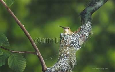 Tiny Treasures - Rufous Hummingbird  www.levitskyart.com
