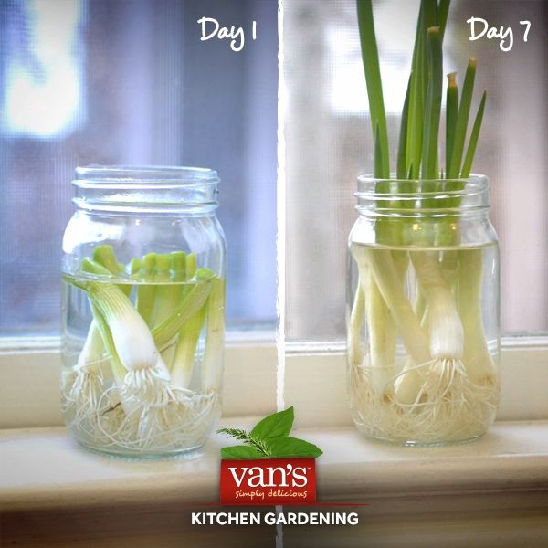17 Best Images About Regrow Veggies On Pinterest: Did You Know That Certain Vegetables Regrow Themselves