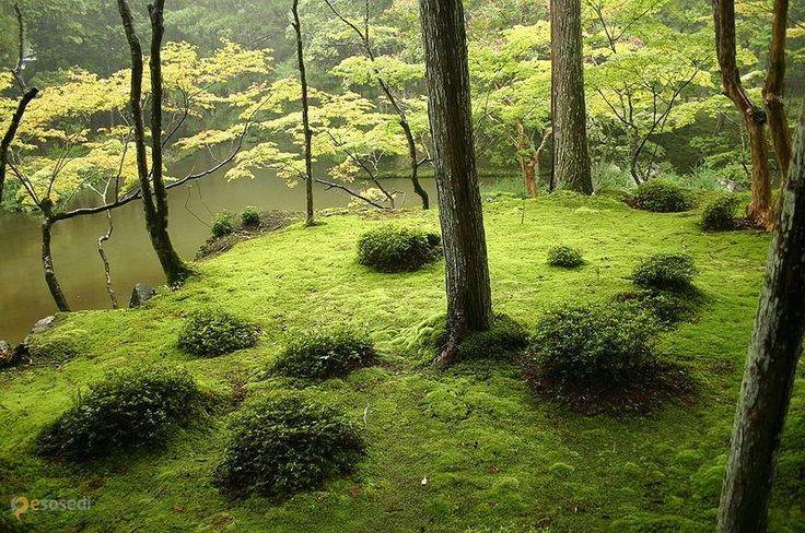 Сад мха – #Япония (#JP) Где еще могли превратить выращивание банального мха в искусство? Конечно же, в Японии. В пригороде Киото, на территории монастыря, находится самый известный в мире Сад мха, между прочим, охраняемый ЮНЕСКО. http://ru.esosedi.org/JP/places/1000090369/sad_mha/