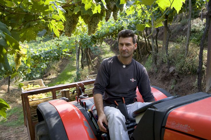 All the grapes are harvested by hand and taken to the winery in the tractor