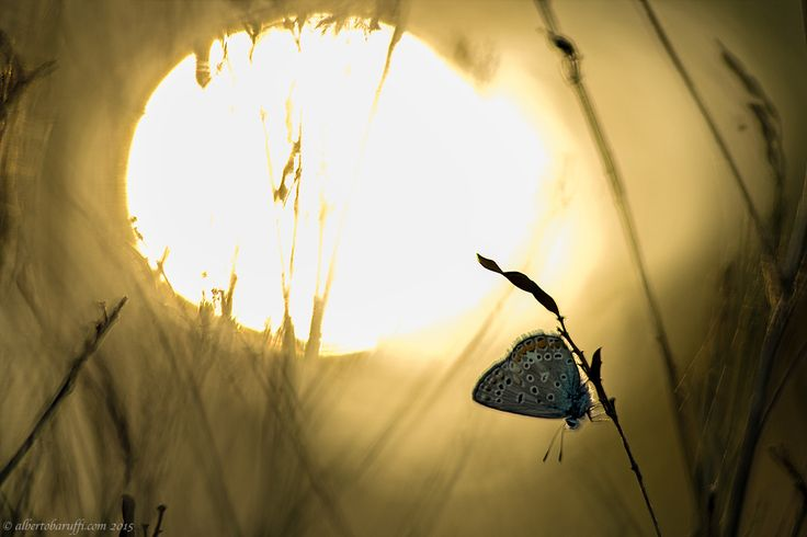 Backlight by Alberto Baruffi on 500px