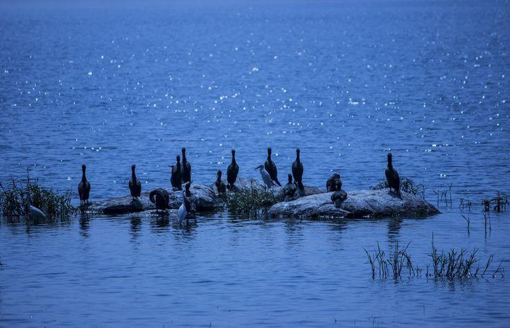 Fishing by Tirtha Banerjee