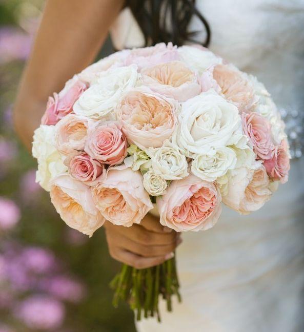 the 25 best juliet garden rose ideas on pinterest