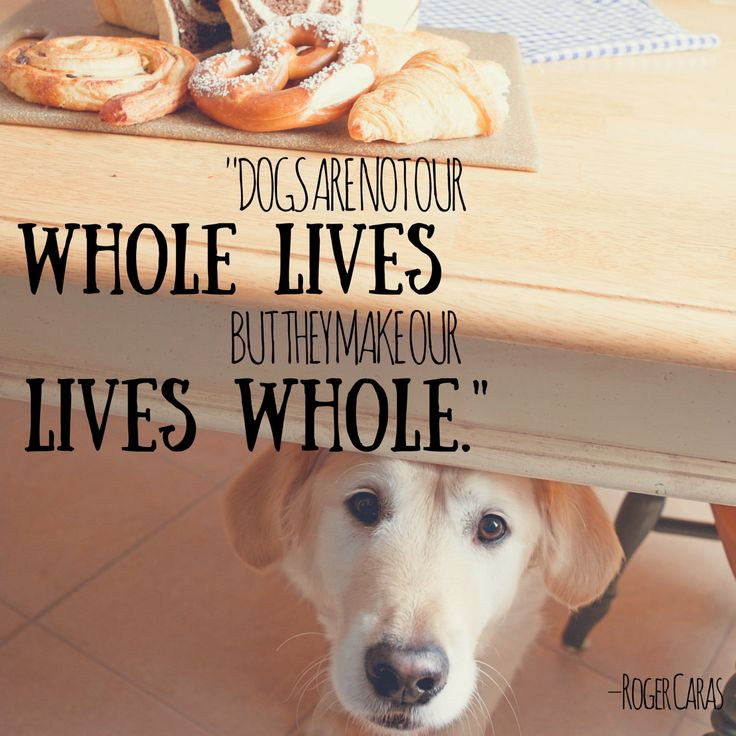 Pinterest Animal Quotes: 17 Best Images About ANIMALS On Pinterest