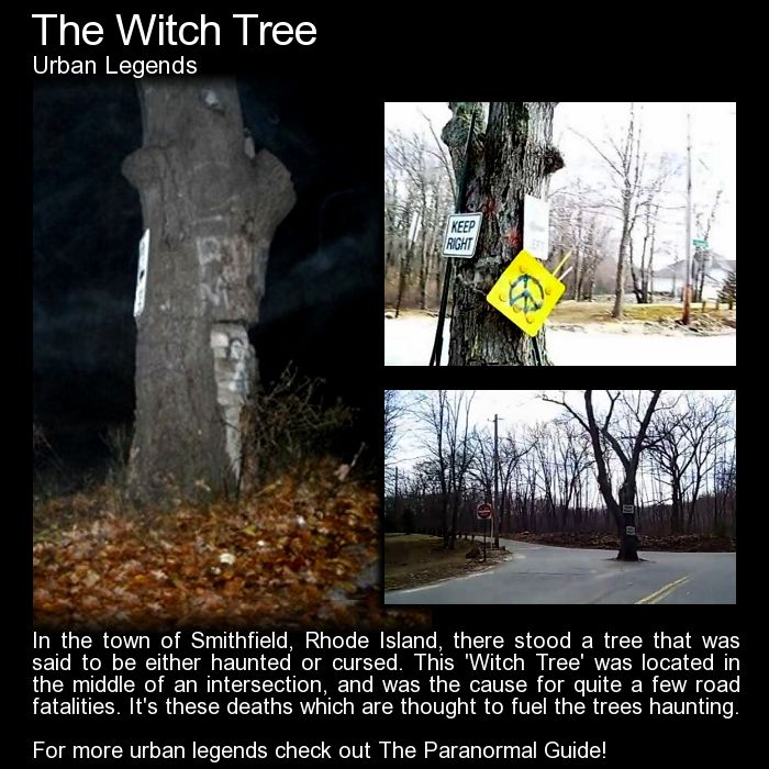 The Witch Tree. An odd place for a tree... well to be fair it was probably there first.. so its an odd place for a road! Read more here: http://www.theparanormalguide.com/blog/the-witch-tree