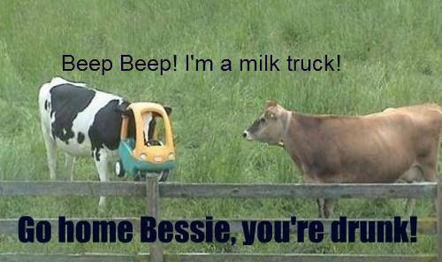 I once whet through this faze where I was obsessed with funny cow pics, this reminds me of it ;)