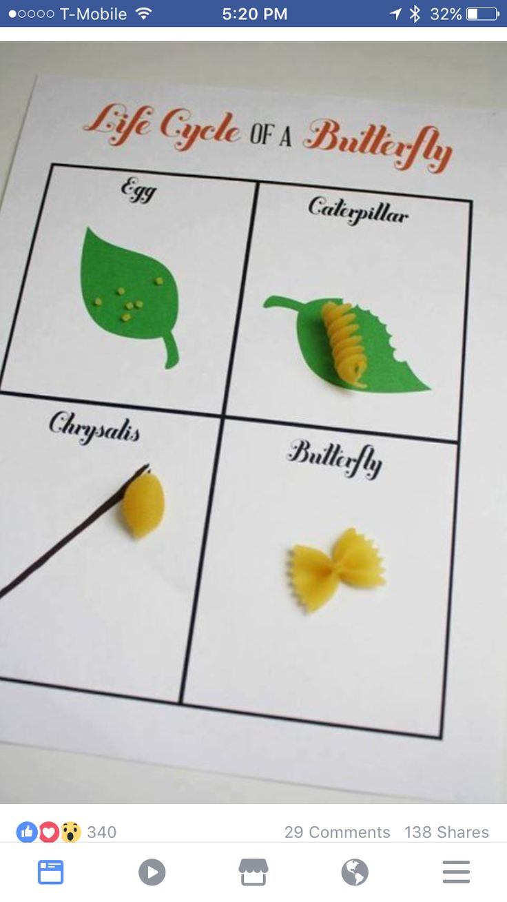 19 best butterfly life cycle learning activities for kids images 19 best butterfly life cycle learning activities for kids images on pinterest butterfly life cycle science ideas and kindergarten science robcynllc Choice Image