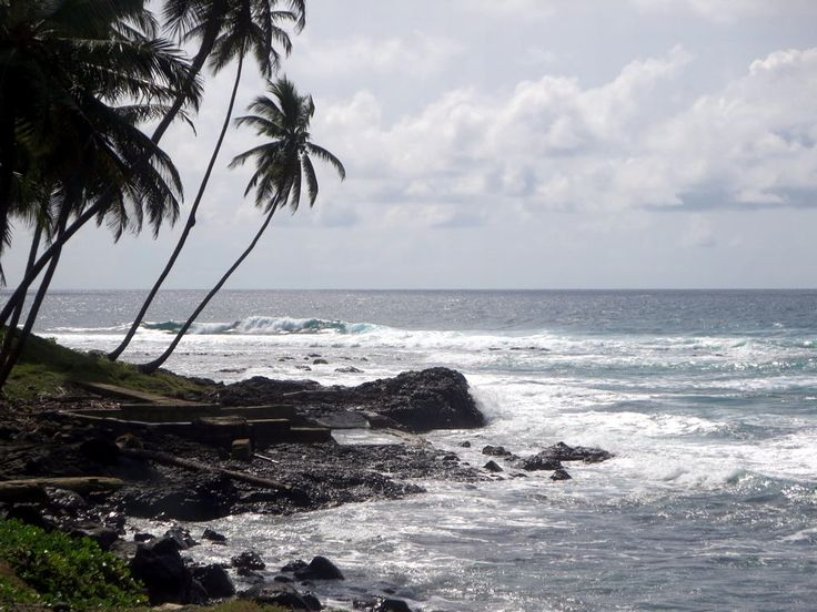 A palm fringed shore on the east coast of Sao Tome Island, São Tomé and Príncipe.