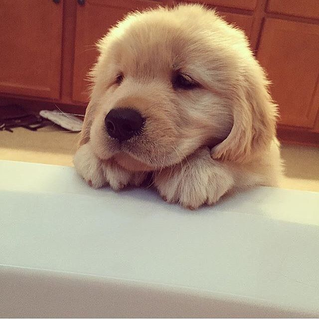Can you wash me please?! Photo by @mississippi_golden_girls