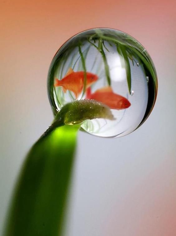 water-droplet-and-fish...Love this <3