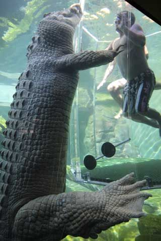Yikes!  Swimming With Crocodiles in Darwin, Australia.