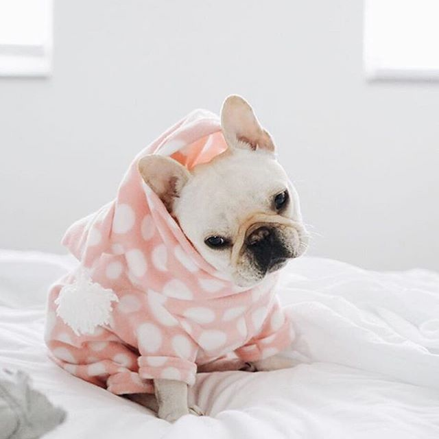sweet Polly, the French Bulldog Princess @piggyandpolly