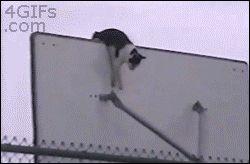 Gifs graciosos + mi agregado Vers. 27 Especial Gatos nº 1
