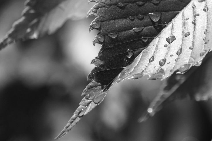 wet-leaf.jpg (1200×800)
