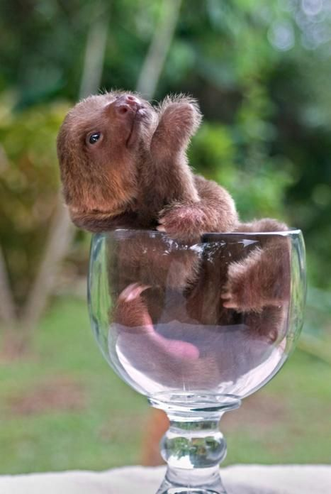 Lovely cute baby sloths we like on the internet for the Meet The Sloths TV Show