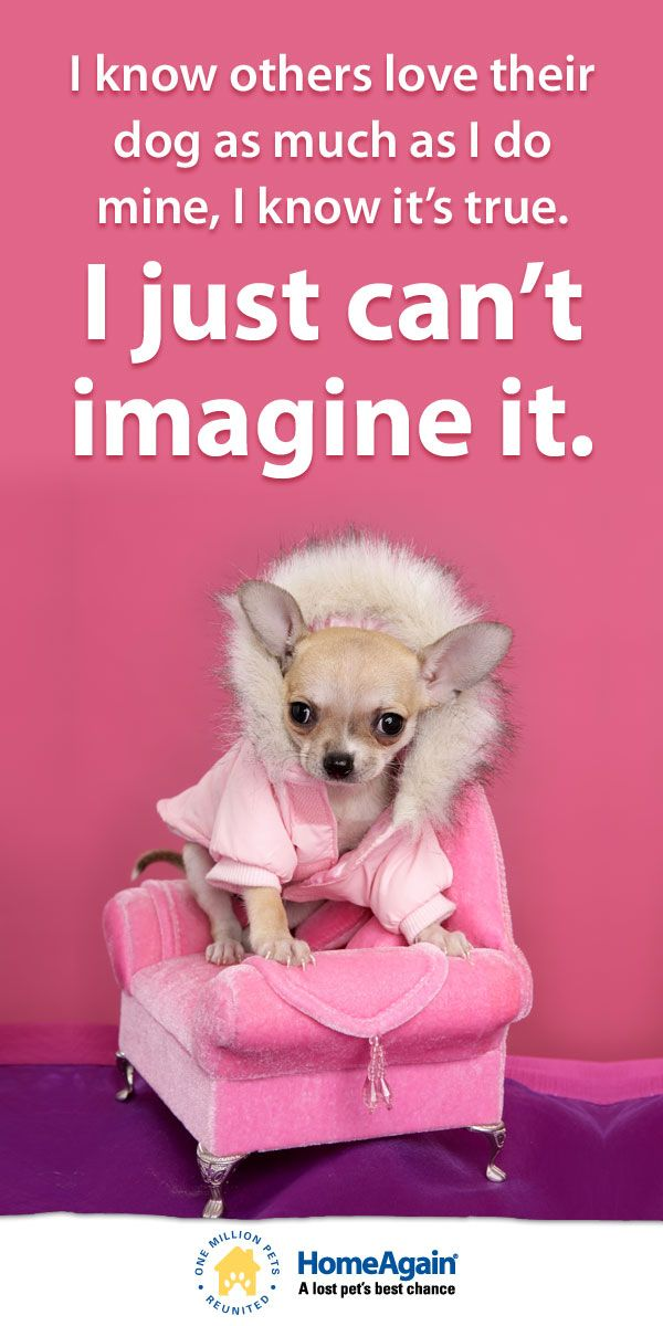 "Must love #dogs! Inspirational dog quote & cute #Chihuahua pin ""I know others love their dog as much as I do mine, I know its true. I just can't imagine it."