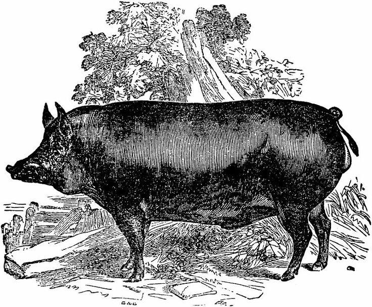 20 best pasture raised pork images on pinterest. Black Bedroom Furniture Sets. Home Design Ideas