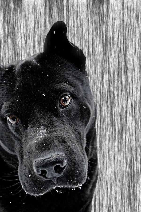 looks like a dog i know!!!