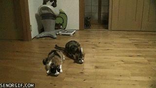 Гифки с кошками :: Кошачий фотосайт. Фото кошек, картинки с кошками