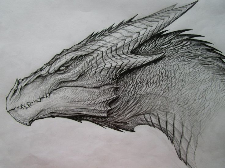 Best 25 cool dragon drawings ideas on pinterest for Cool detailed drawings