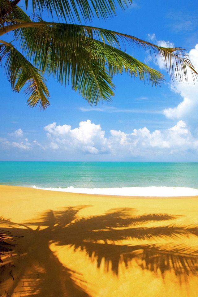 Tropical Palm Tree On Beach
