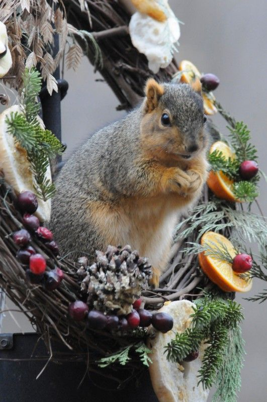 Wreath for birds (the squirrels will enjoy it too!)