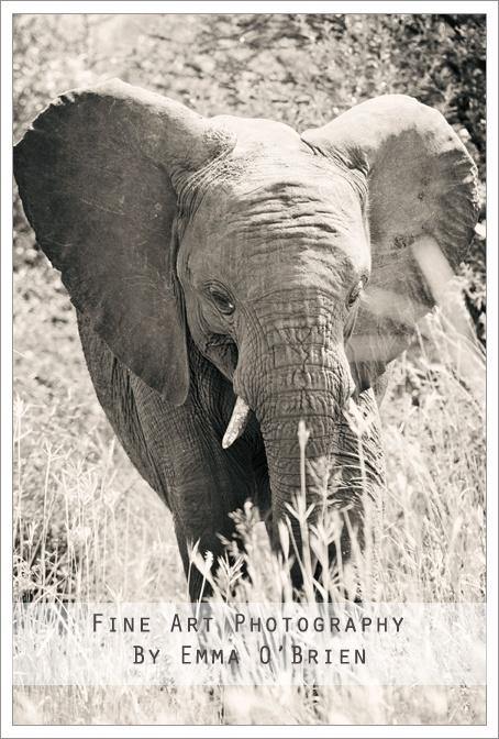 Playful elephant at Pilanesberg National Park http://emmaobrien.com