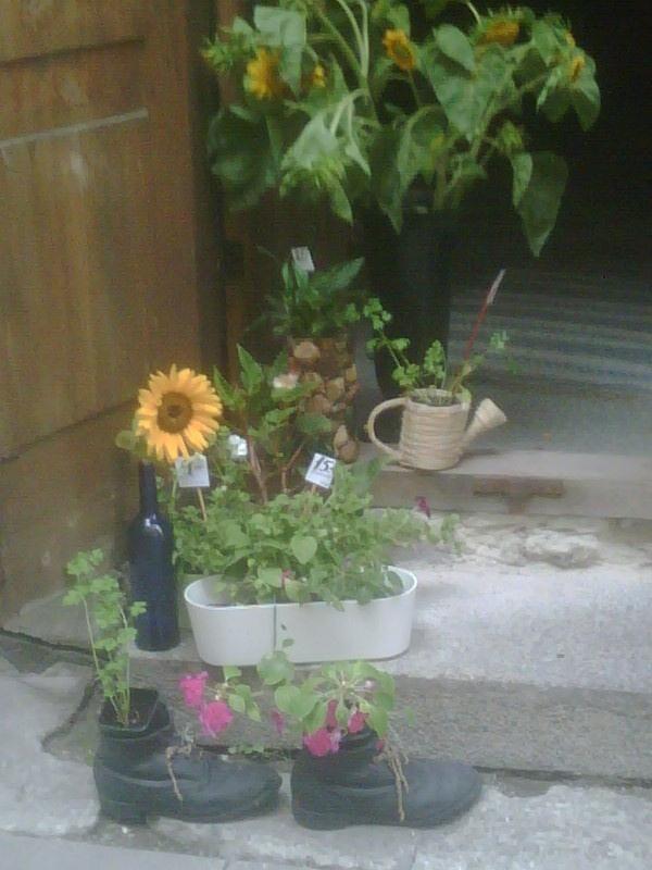 un bon lloc per fer créixer les millors flors, ja sigui a Tallin o a casa meva