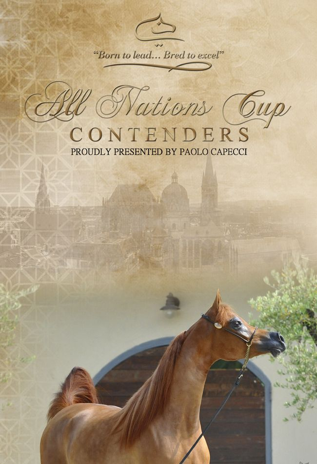 D Jawaher - All Nations Cup Junior Filly Contender