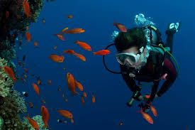 solomon islands - Best Diving Holiday Ever