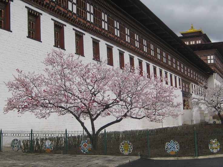 Dzong with peach blossoms in spring