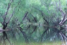 Image result for bush reflections