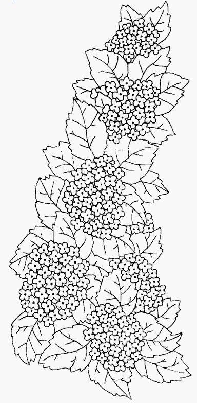 рисунки цветов раскраски - Поиск в Google