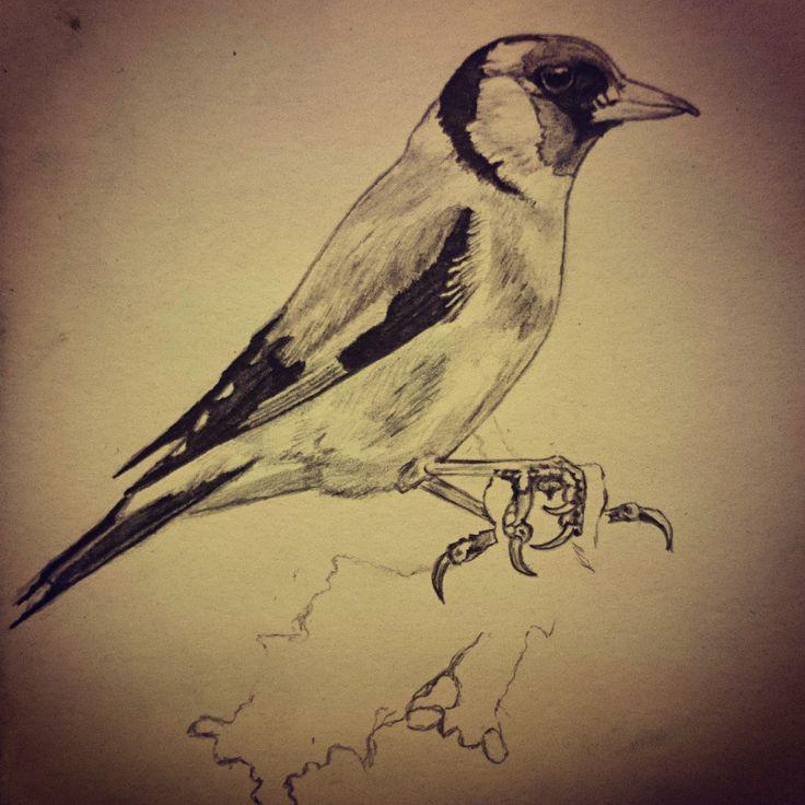 Pajaro jilguero (goldfinch)