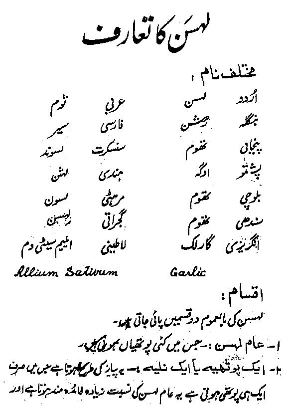 Garlic Benefits Lehsan K Fawaid in Urdu Khawas e Lehsun ...