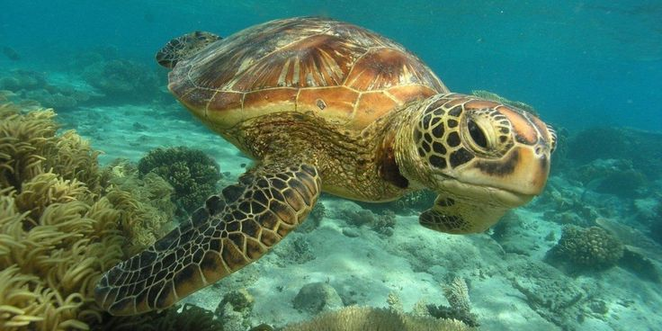 Toxic chemicals found in sea turtles, whales, etc. See https://www.ecowatch.com/turtles-great-barrier-reef-2430168418.html