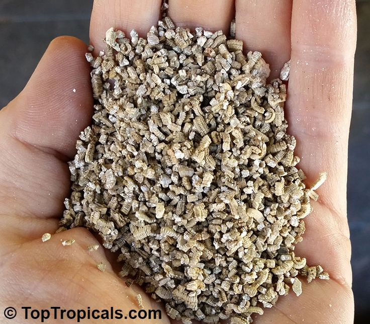 Vermiculite - soilless growing media Vermiculite is a hydrous, silicate mineral. It is a wonderful growing media for many purposes: Soilless growing media: exfoliated vermiculite is combined with other materials such as peat or pine bark to produce soilless growing media for the professional horticulturalist and for the home gardener. These mixes promote faster root growth and give quick anchorage to young roots. The mixture helps retain air, plant food and moisture, releasing them as the…