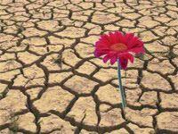 Los pilares de la resiliencia