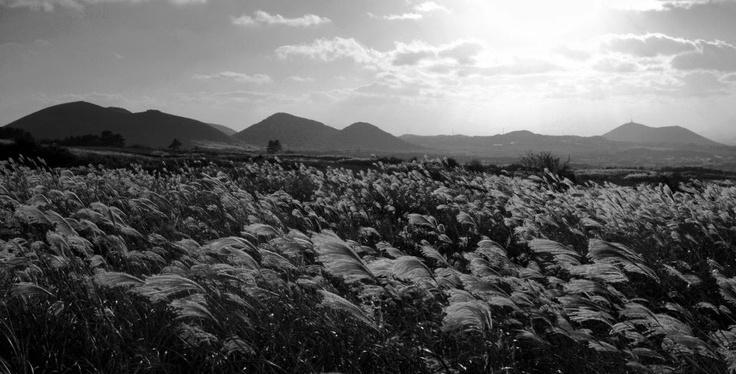 [오름] 밤이 깊었을때 아침 햇살을 기다리듯이 여름이 한창인 요즘, 선선한 가을 들녘을 생각해봅니다! 입추가 지났죠! 더위가 이제 한풀 꺾일 때도 된거 같은데... 생각만이라도 바람이 살랑살랑 춤을 추는 저 가을 들녘을 향해 달려갑니다~~~ ^^ - 어느 가을 제주 새별오름 들녘에서... #카톡 허정윤님