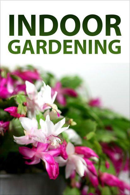 27 best house plants images on pinterest floral for Indoor gardening pdf