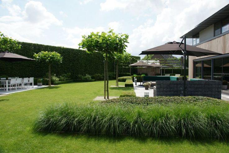 Siergras bolcatalpa de strakke tuin groen van bij ons for Strakke tuinen met siergrassen