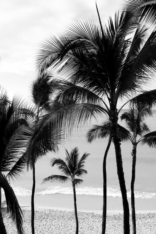 Palms in Black n white