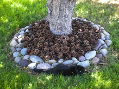pine cones for mulch -- keeps cats and other animals out of gardening beds and also reduces mold/mildew since the pine cones aren't packed down like bark mulch or pine straw.
