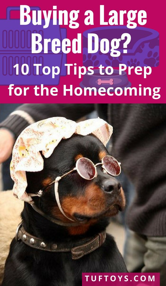 10 Top Tips To Prepare For Your New Big Dog Big Dogs Dog