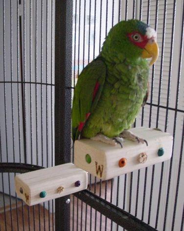 136 Best Z Birds Parrot Perches Images On Pinterest