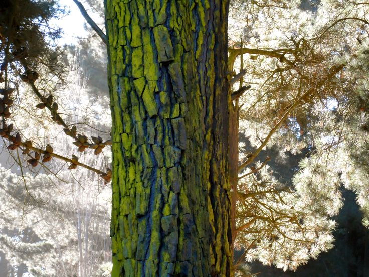 Woodend Beach Holiday Park forest! Trees, sunlight, leaves, photography...