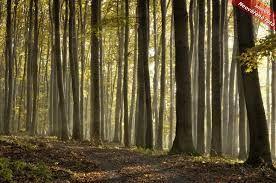 Výsledek obrázku pro lesy
