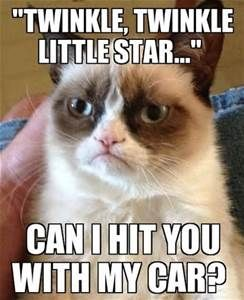 grumpy cat - Yahoo Image Search Results